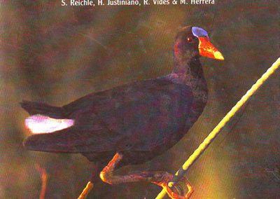 Guía de Aves del Bosque Chiquitano y Pantanal Boliviano