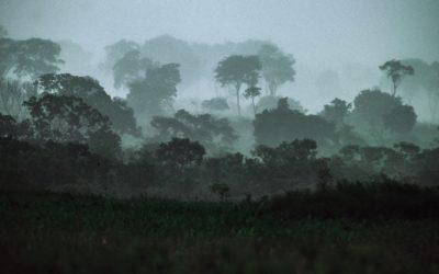 Convocatoria de proyectos de investigación del bosque seco tropical
