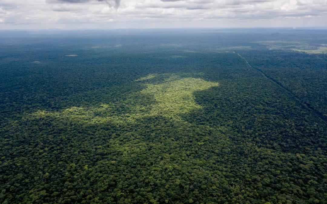 ¡21 de marzo, día internacional de los bosques!
