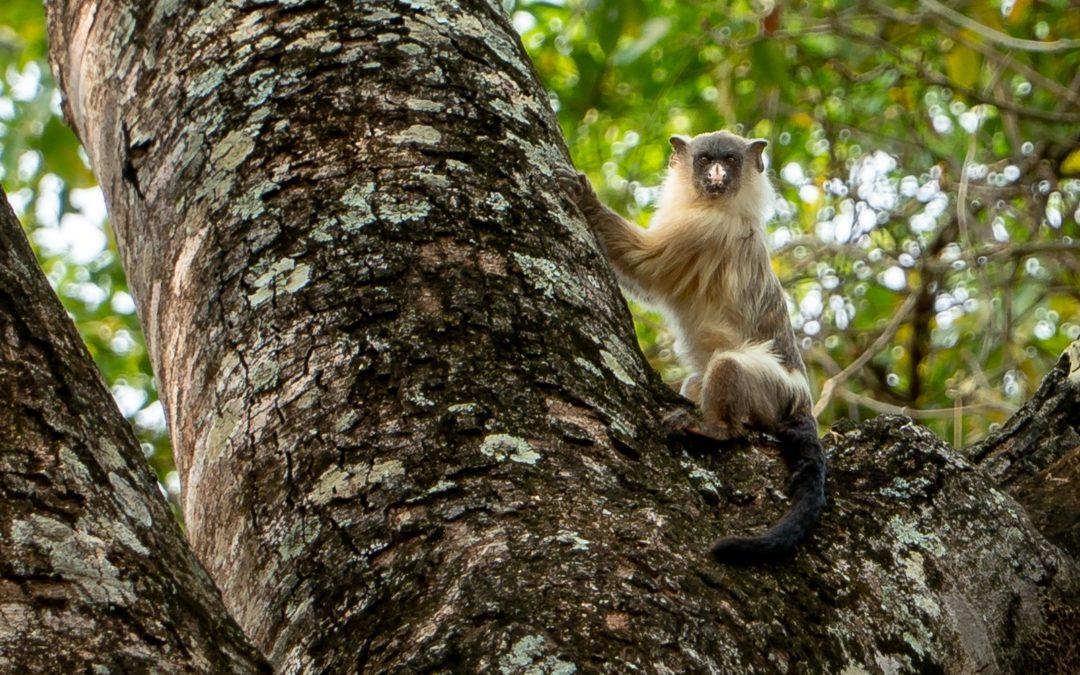 Día Mundial de la Biodiversidad
