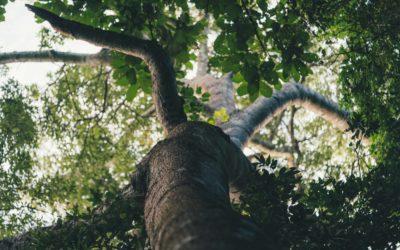 1ro de octubre – Día del árbol