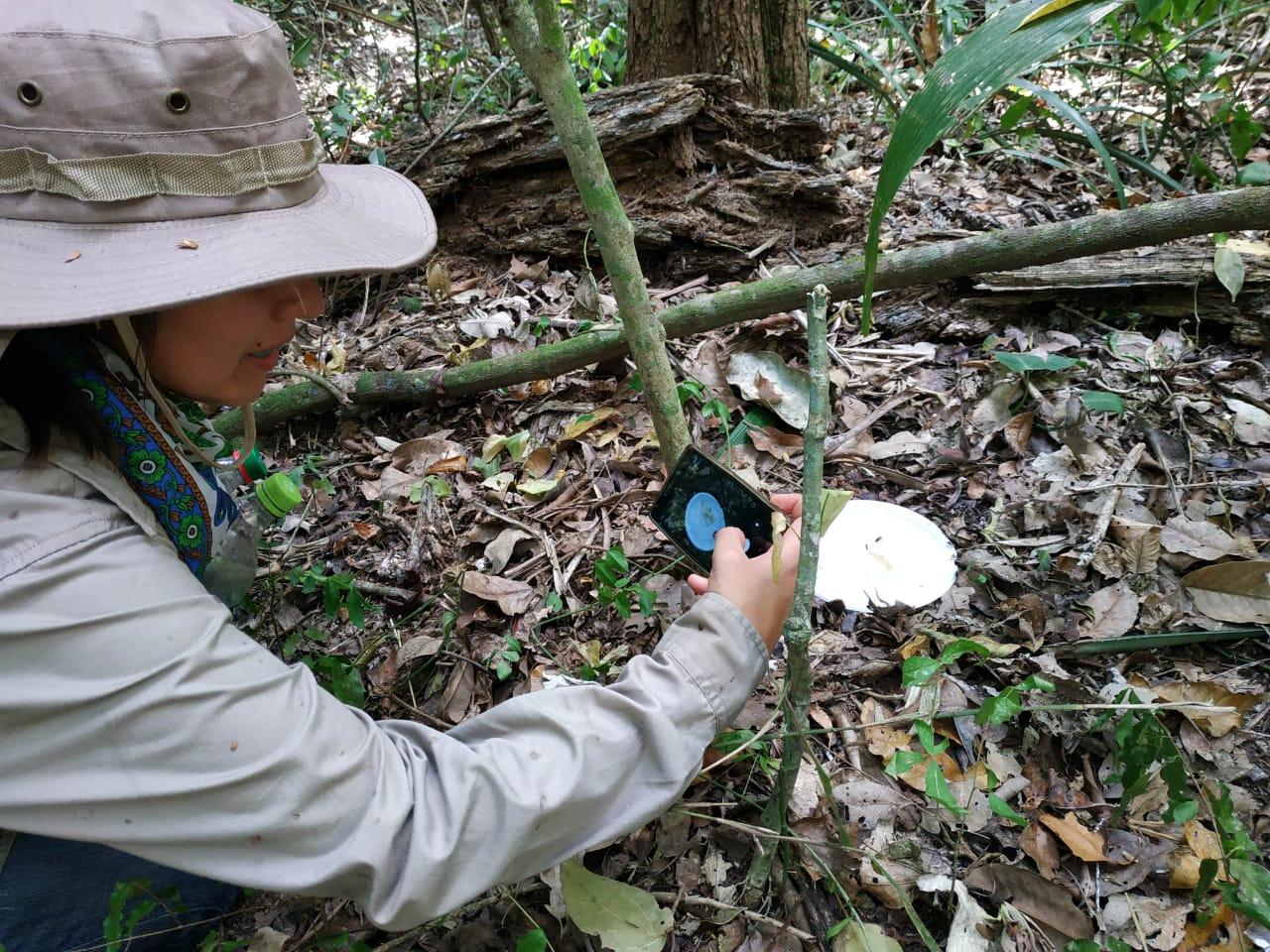 Aventuras y aprendizaje en los bosques de Alta Vista