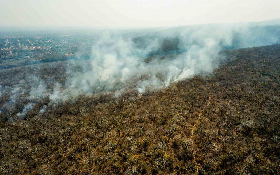 «OUR FORESTS ARE DYING»