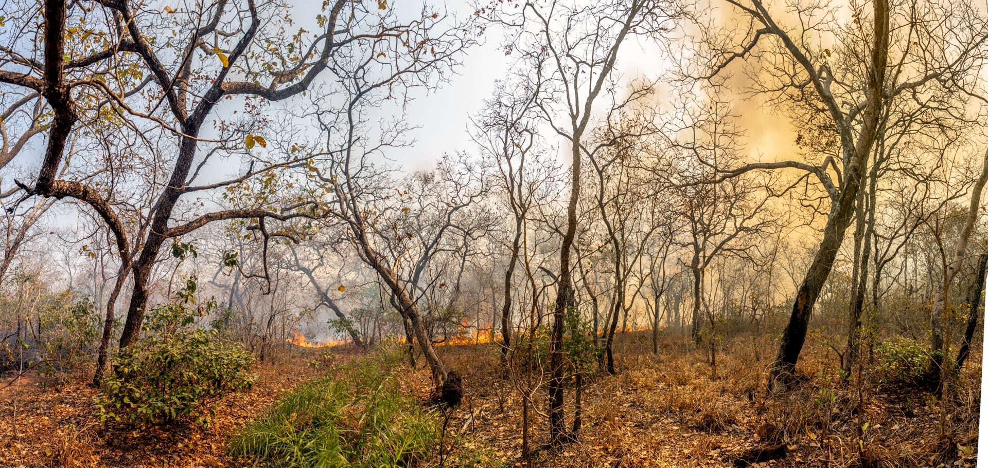 Pronunciamiento de entidades técnico – académicas respecto a los incendios en la Chiquitania