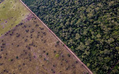 The last GREAT Tropical Dry Forest of the planet