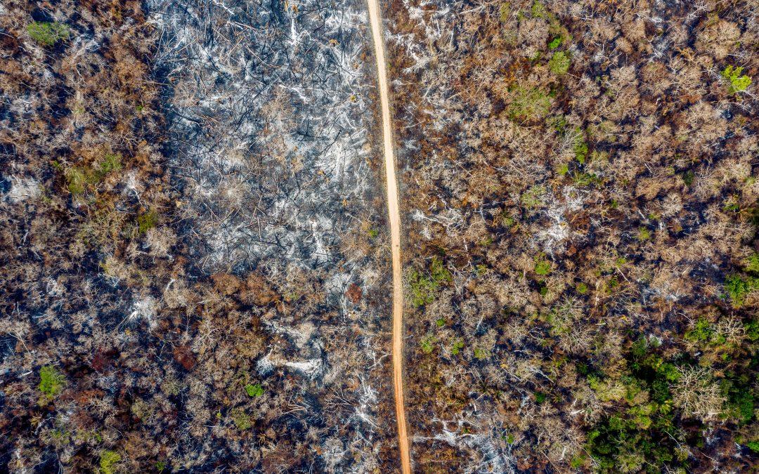 Especialistas de la FCBC contribuyen al conocimiento científico con un estudio entre la relación de la fragmentación del bosque, sequías e incendios forestales en el departamento de Santa Cruz