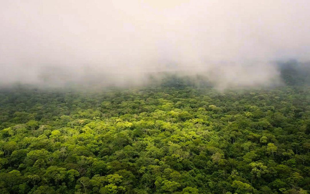 Más de 30 fondos ambientales firman acuerdo para apoyar el Compromiso de los Líderes por la Naturaleza