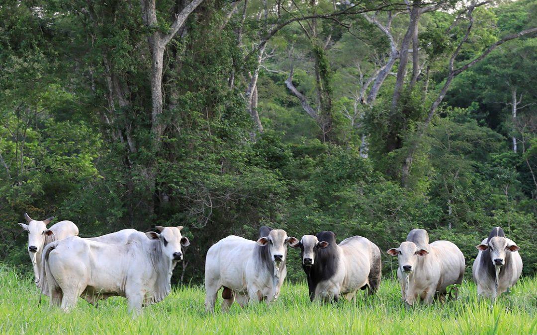 El Centro de Estudios del Bosque Seco Tropical Alta Vista presenta 10 experiencias innovadoras y sustentables para el manejo del ganado en la Chiquitanía