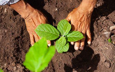 Bases del conocimiento para la restauración en el Bosque Modelo Chiquitano
