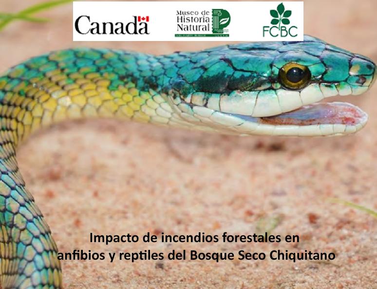 Impacto de incendios forestales en anfibios y reptiles del Bosque Seco Chiquitano