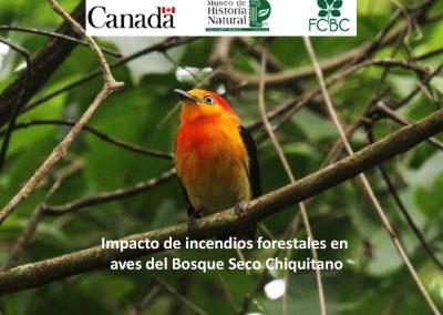 Impacto de incendios forestales en aves del Bosque Seco Chiquitano