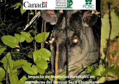 Impacto de incendios forestales en mamíferos del Bosque Seco Chiquitano