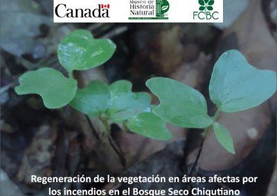 Regeneración de la vegetación en áreas afectadas por incendios en el Bosque Seco Chiquitano