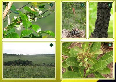 Plantas de los Cerrados del PNKM