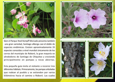 Plantas de los Cerrados de Santiago